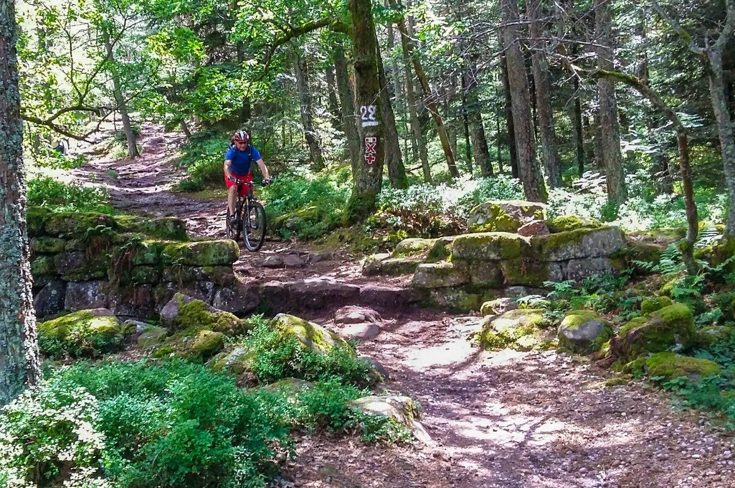 Elsass Vogesen Woche mit einem Biker auf einer Abfahrt im Elsass